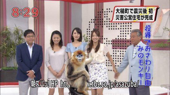 出典:http://userdisk.webry.biglobe.ne.jp/021/789/36/N000/000/000/137867764428113126857_Golden.Mino.monkey.jpg